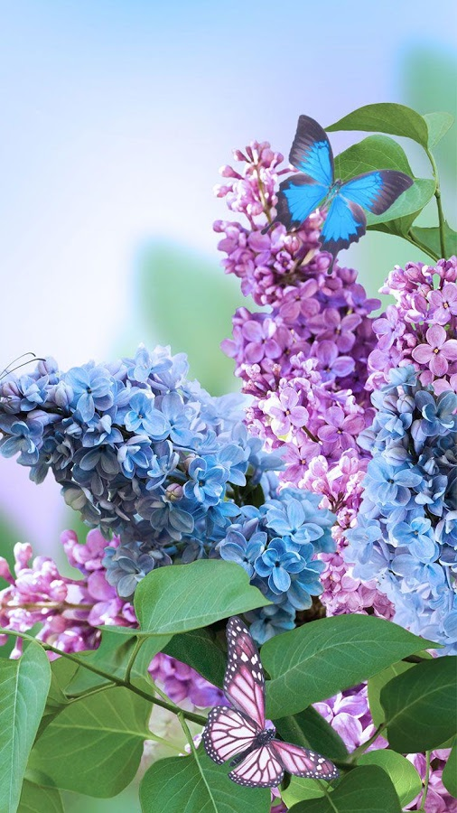 Spring Flowers Live Wallpaper screenshot ...