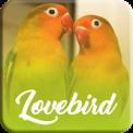 Master Kicau Lovebird Offline