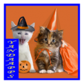 Halloween Costumes Animal