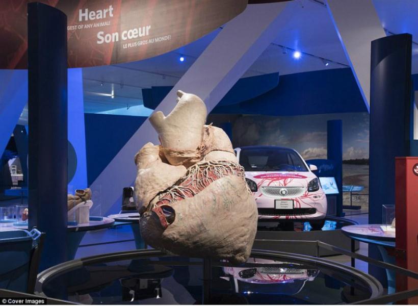 Jantung Seberat 200 Kg Jadi yang Terbesar Sedunia