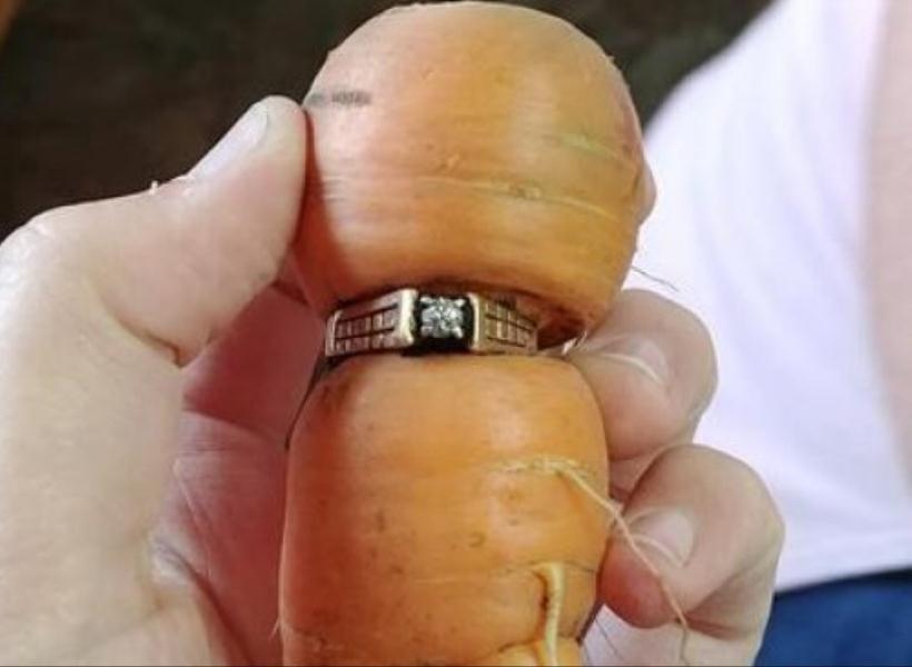Cincin Kawin yang Hilang Ditemukan di Sebatang Wortel