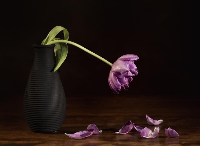 Tips Jitu Menghidupkan Tanaman yang Sudah Layu