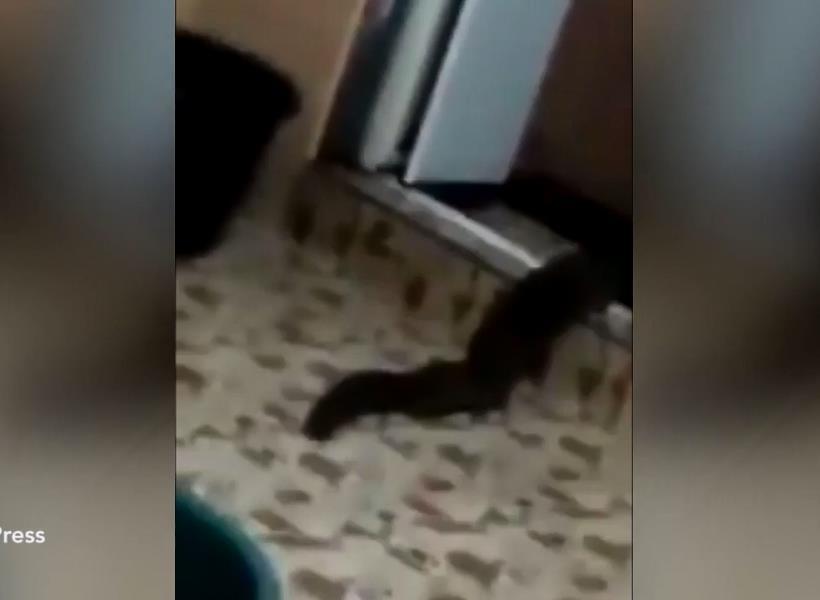 Makhluk Misterius Keluar dari Toilet