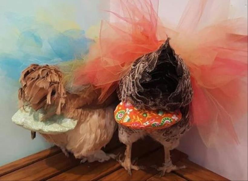 Raup Rp800 juta dari Jualan Popok Ayam
