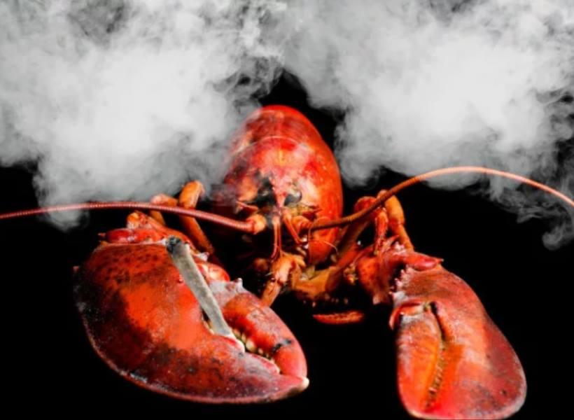 Restoran Bius Lobster dengan Ganja Sebelum Dimasak