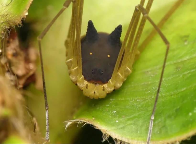 Hewan Aneh, Mirip Laba-laba Tapi Ada Kepala Anjingnya
