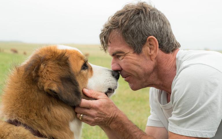 A Dog's Purpose Trailer
