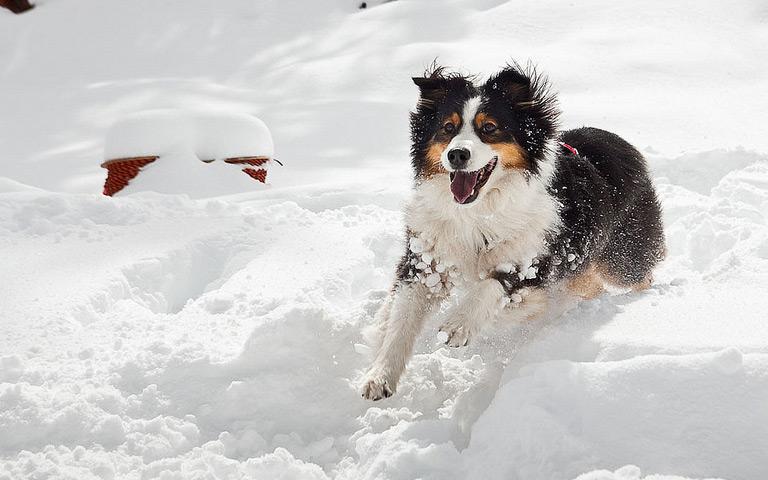 Lucunya Anjing Main Salju