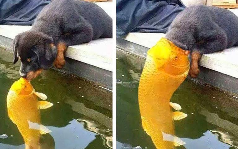 Cara Makan Beberapa Binatang yang Tidak Biasa