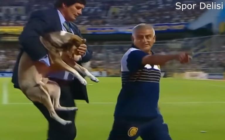 Sporda Sahaya Giren Hayvanlar